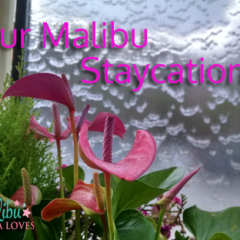 Our Malibu Staycation – Mama Loves Family Travel