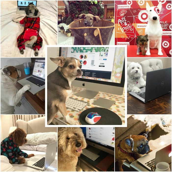 Cute Dogs Shopping on Cyber Monday