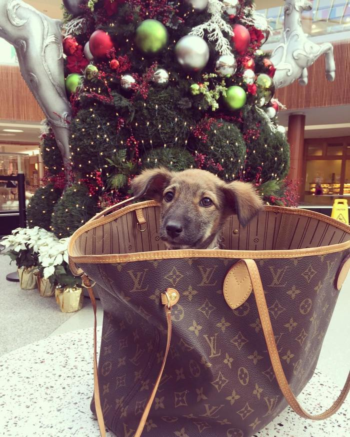 cyber-monday-cute-puppy-louis-vuitton-handbag-by-samana2boston-11-28-2016-1
