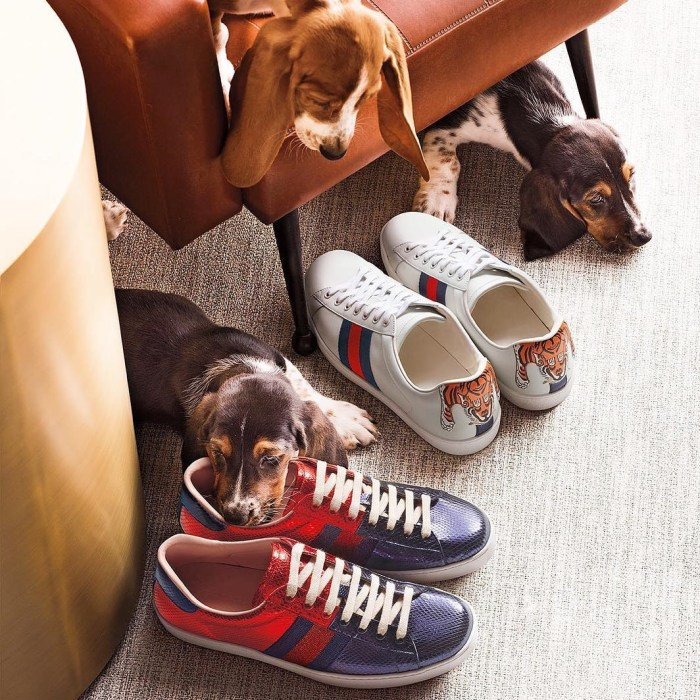 GUCCI Mens Sneakers… Man's Best Friend
