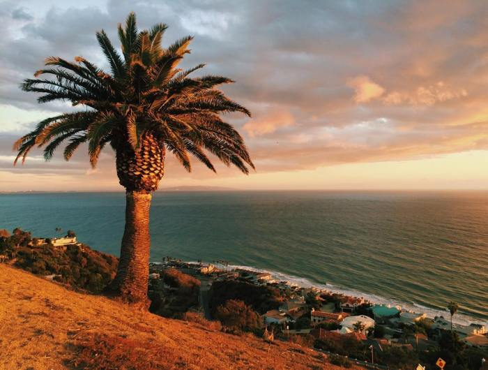 palm-tree-and-sunset-after-the-storm-in-malibu-california-by-jessiecranston-11-27-2016-1