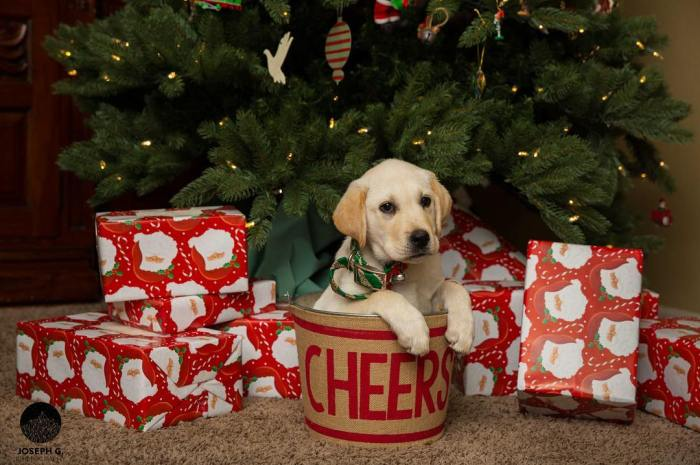 10-cute-holiday-puppies-joegulizia-1-12-22-2016-1