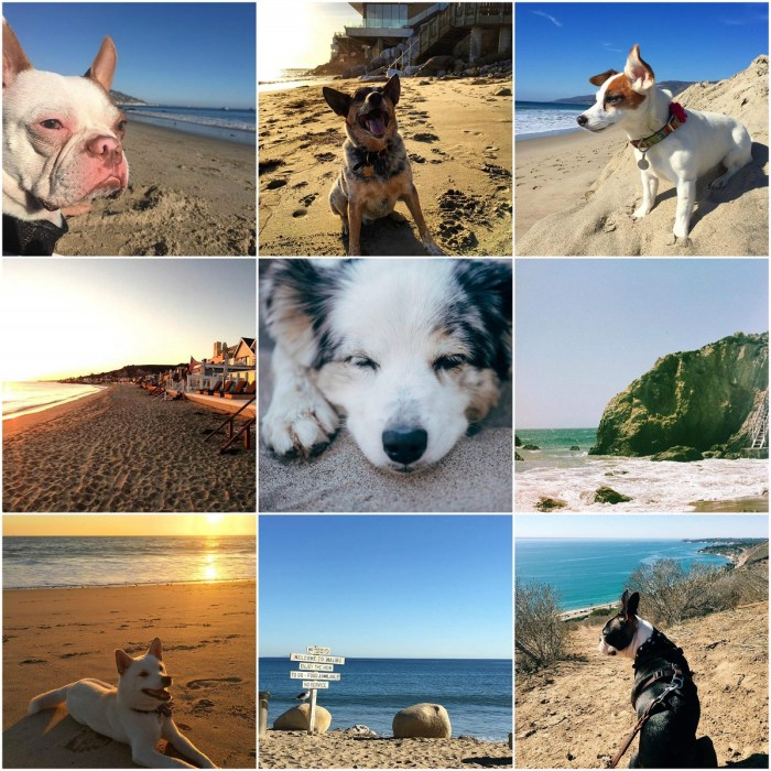 Cute Dogs and Malibu Beach
