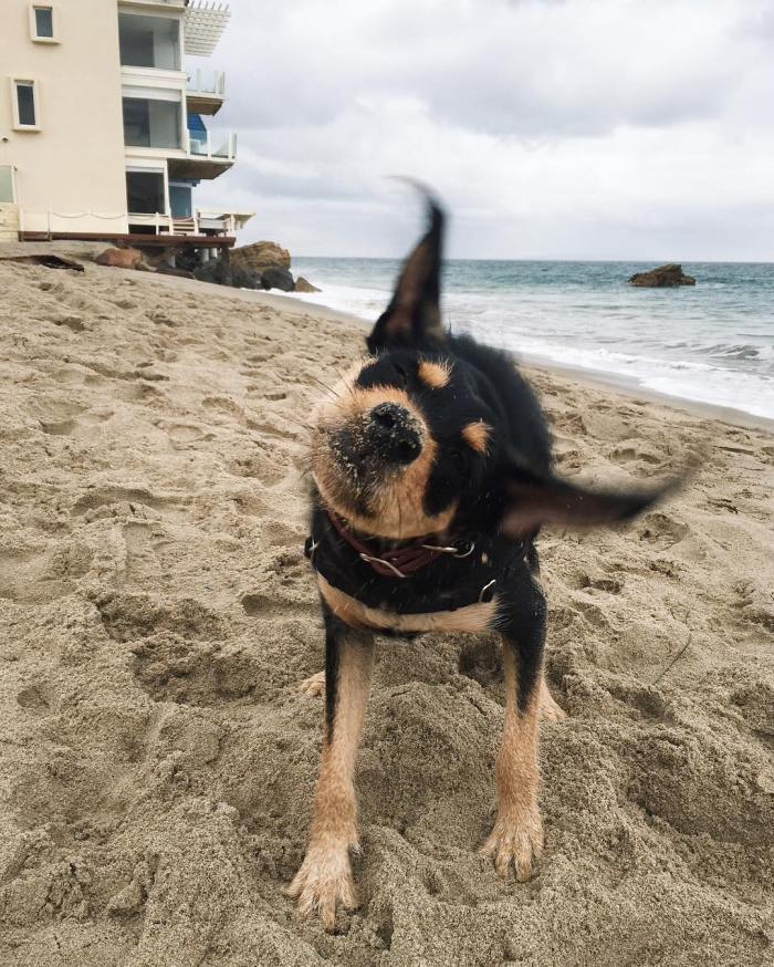 Bat Dog at Malibu Beach