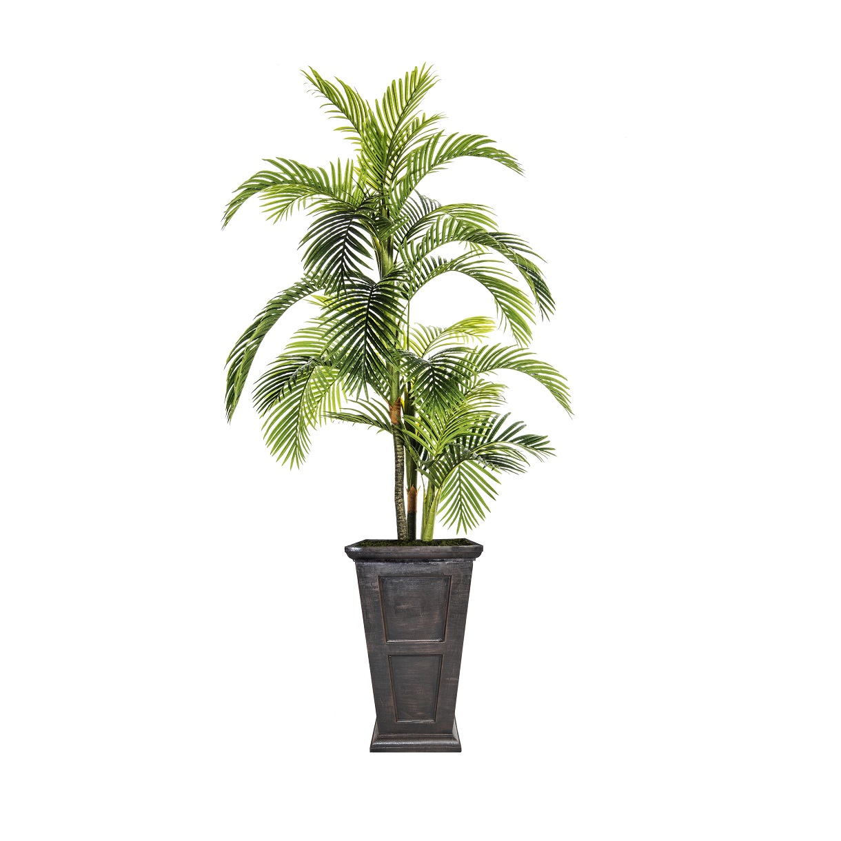 Fiberstone Palm Tree In Planter By Laura Ashley Home