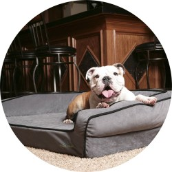 Crown Supreme Orthopedic BuddyRest Pet Bed