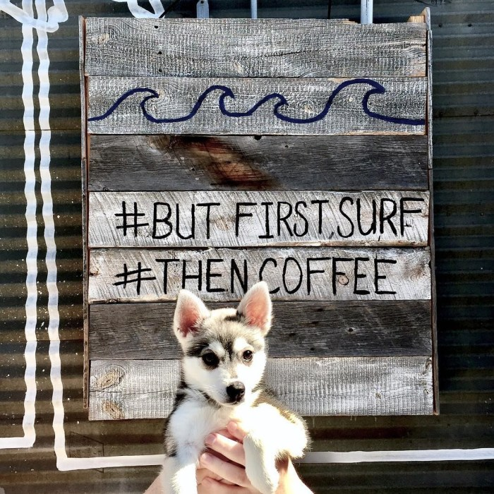 But First Surf, Then Coffee! Vienna the Mini Husky at Bondi Harvest Cafe in Santa Monica