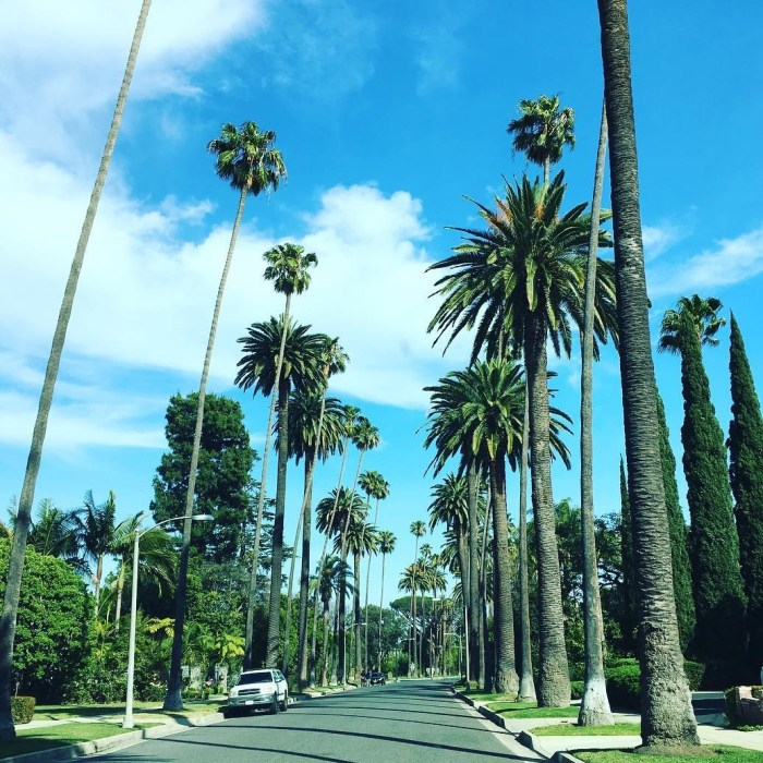 Blue Skies & Palm Trees in Beverly Hills