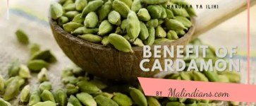 Benefits of Cardamon (Iliki) – Spices of Malindi