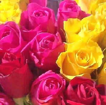 assorted-roses.jpg