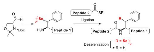 B-selenol Phe TOC OL2012