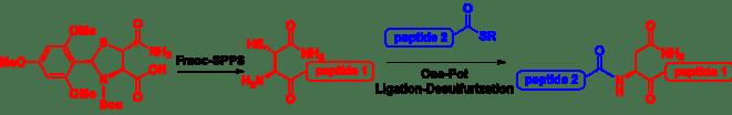 Beta-thiol Asn TOC