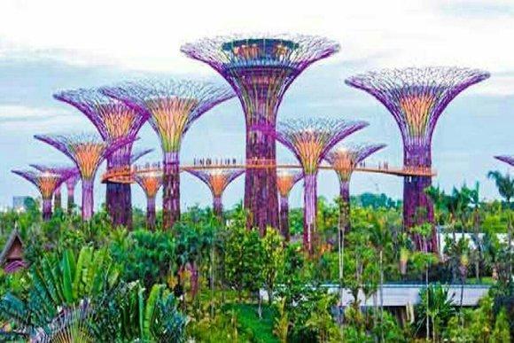 Supertrees de singapour en image