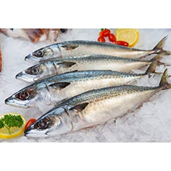 Boston Mackerel /1 Lb