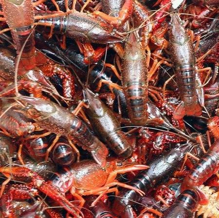 Live Crayfish 小龙虾 2 Lb