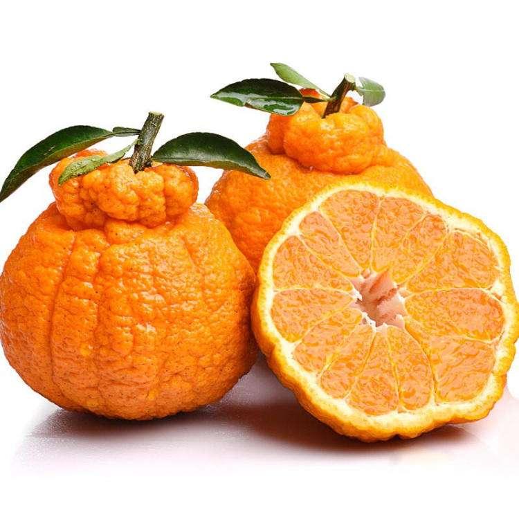 Ugly Tangerine 丑橘 / LB