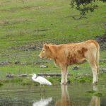 Curso en Gestión de enfermedades en la interfaz fauna-ganadería