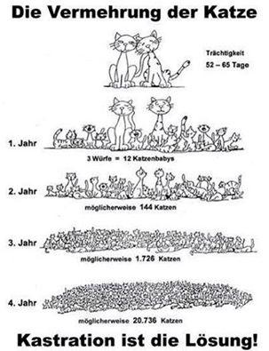 Katzenvermehrung