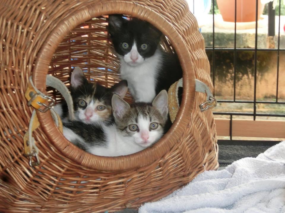 Katzenkinder - Felix Animal Andratx