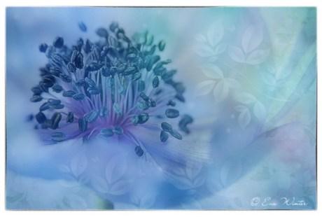 Composing Blue-Dream