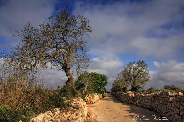 Mallorca 15