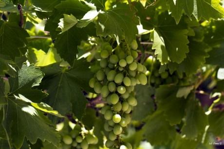 Wein- und Käsemesse, 01.05. @ Estellencs | Balearische Inseln | Spanien
