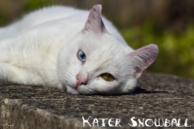 Kater Snowball 2014