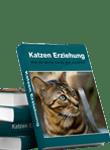 Katzen Erziehung - Wie du deine Katze gut erziehst