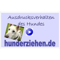 Ausdrucksverhalten des Hundes (Webinar)