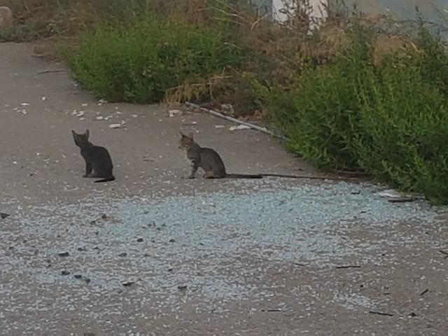 061217 gatitos en el estadio del Baleares