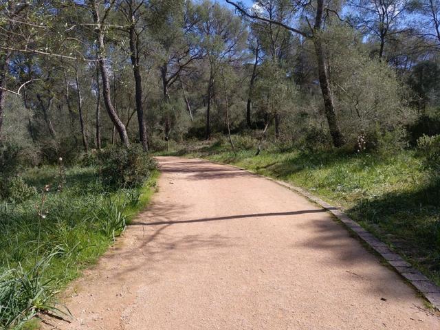 Castell Bellver parque bosque 3