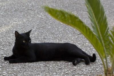 Katze Minca