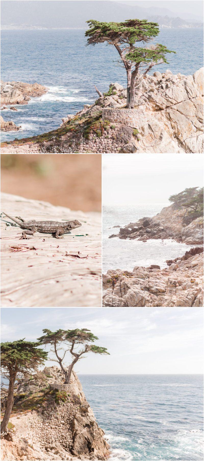 The Lone Cypress 17-Mile Drive Pebble Beach California