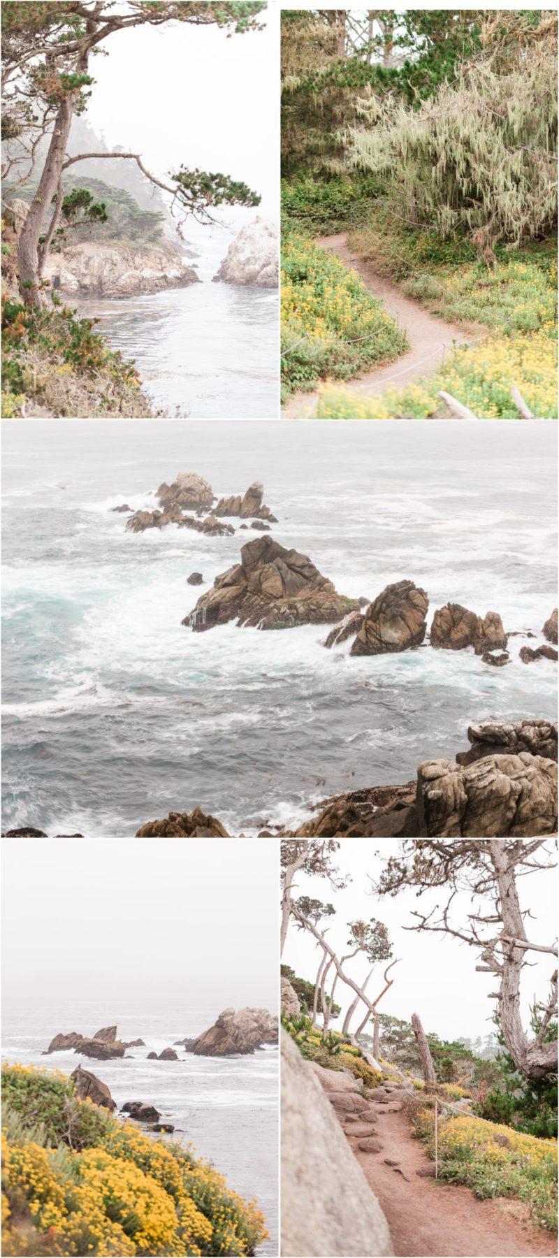 Point Lobos State Natural Reserve Carmel California