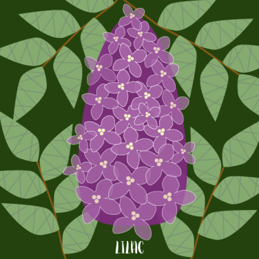 Lilac2_MalloryHazel