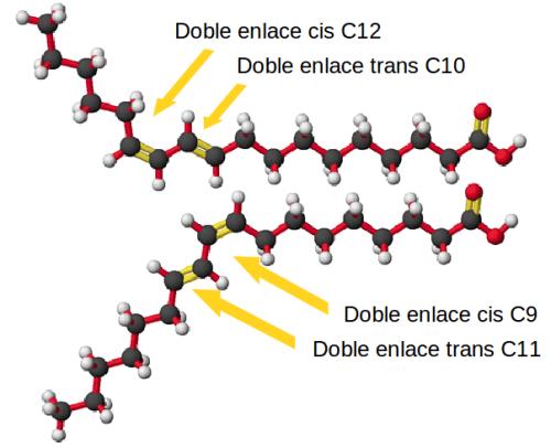 Estructura del CLA, señalando los dobles en laces en los carbonos 9 y 11 o 10 y 12.
