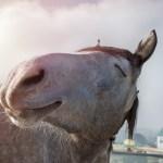 Malou_athritis_post_happy_horse Allgemeine Information