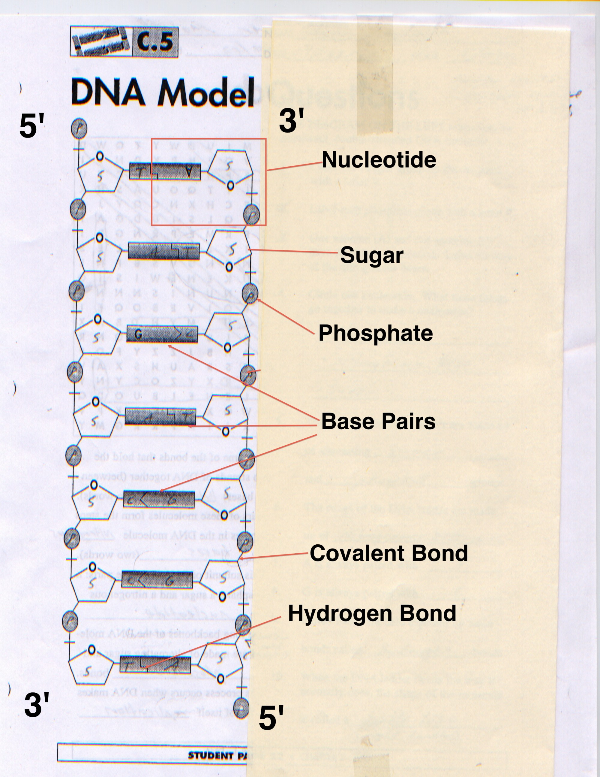 hight resolution of dna the making of malouffbioblogdna diagram labeled 19