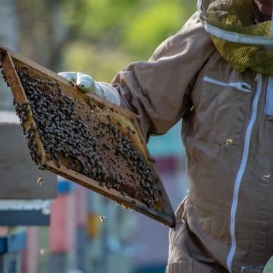 rayon de miel à Saint-Malo