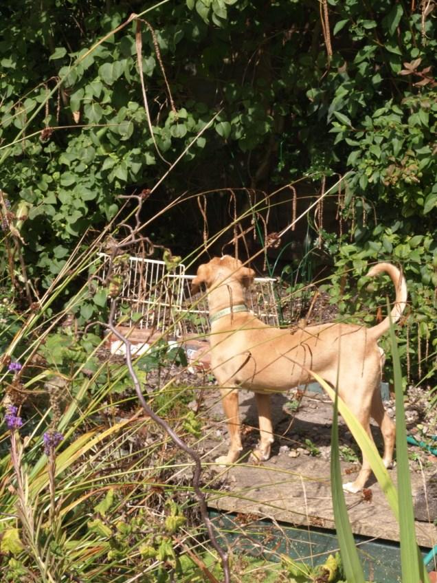 Piper in the garden