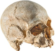 Skull from Ħal Saflieni Hypogeum (source: Heritage Malta media department/Daniel Cilia)