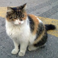 Pick a rescued cat as a pet for your children - Beth explains why.