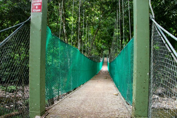 In the rainforest, Borneo
