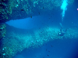 Dive site in Gozo Double Arch