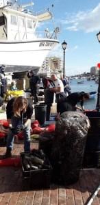 Marine Cleanup Malta