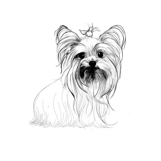 tiny yorkshire terrier