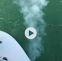 ヨットの白煙