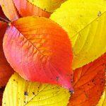 紅葉の季節だ~