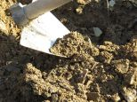 The soil is gently mounded up just barely covering the scion to protect it and keep the graft humid, to aid rapid fusing