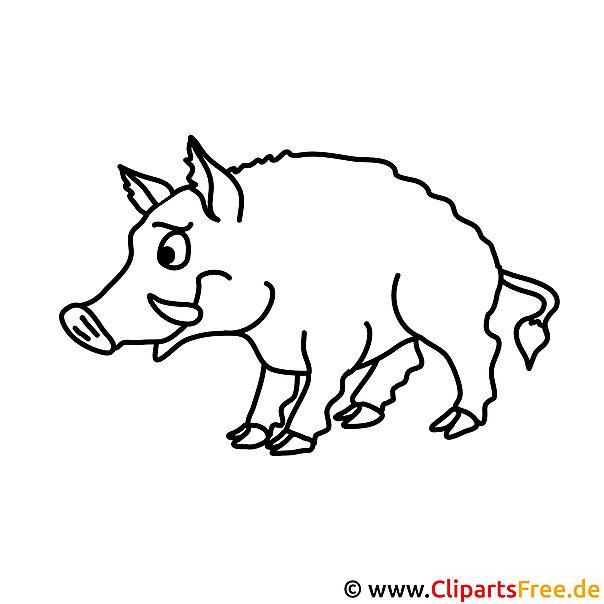Schwein Bild zum Ausmalen Malvorlage